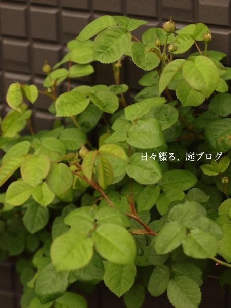 f:id:m-garden-life:20170420164312j:plain