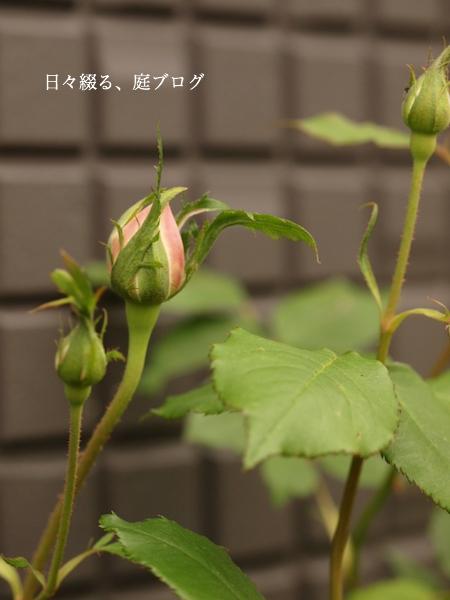 f:id:m-garden-life:20170420164611j:plain