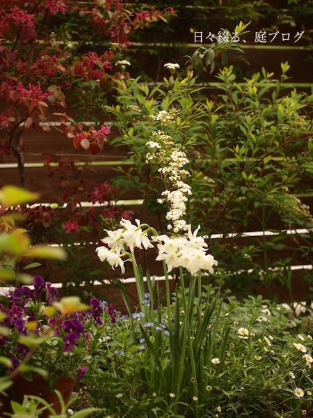f:id:m-garden-life:20170420165111j:plain