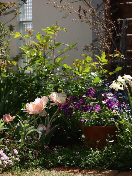 f:id:m-garden-life:20170422125950j:plain