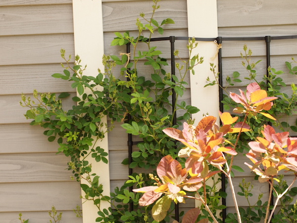 f:id:m-garden-life:20170422131015j:plain