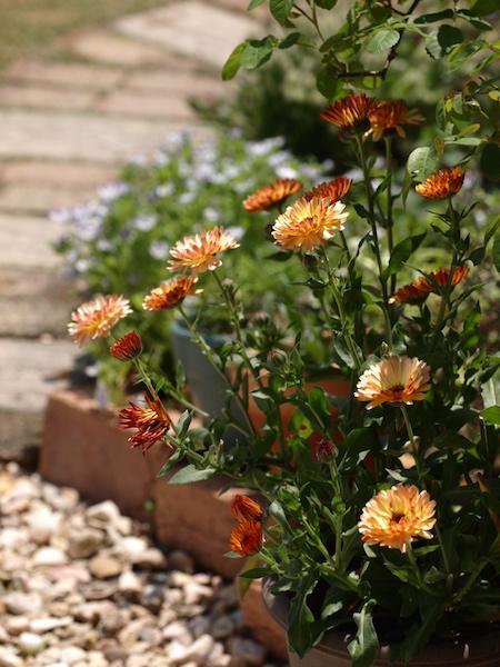f:id:m-garden-life:20170422131941j:plain