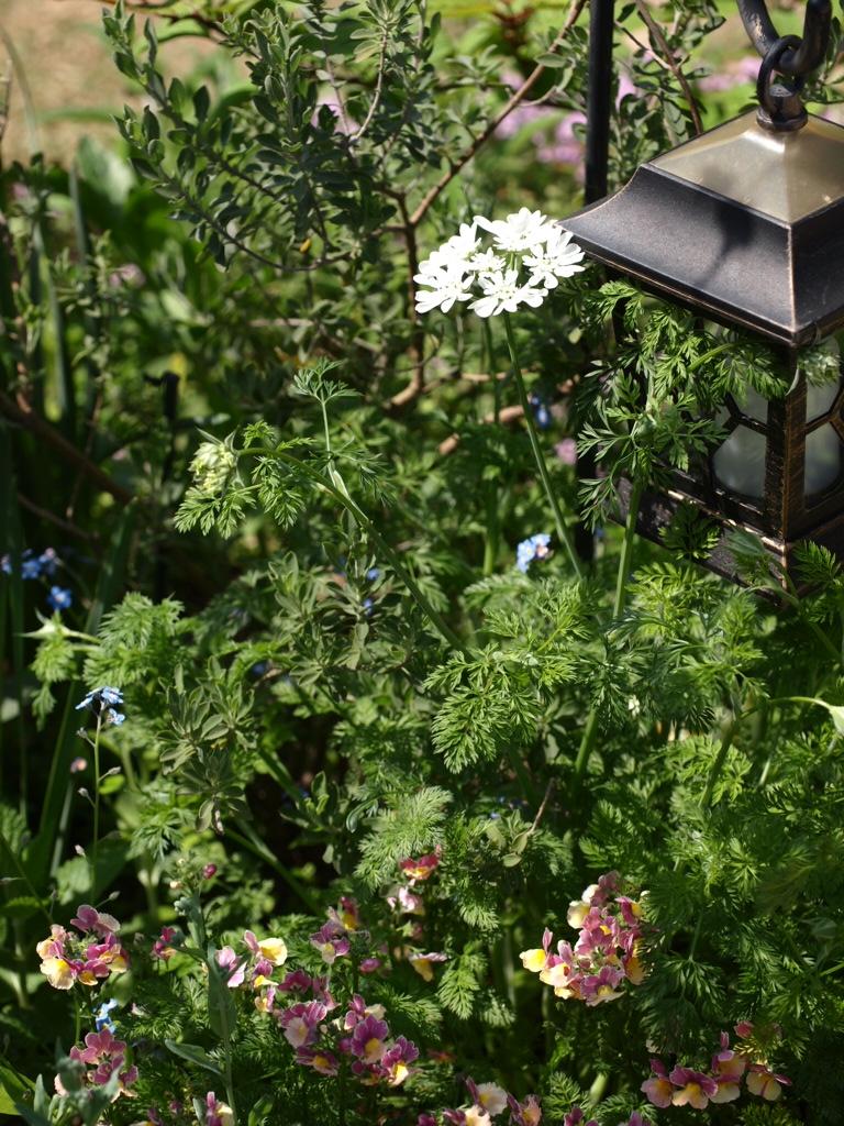 f:id:m-garden-life:20170422133626j:plain