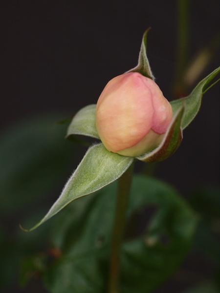 f:id:m-garden-life:20170424163342j:plain
