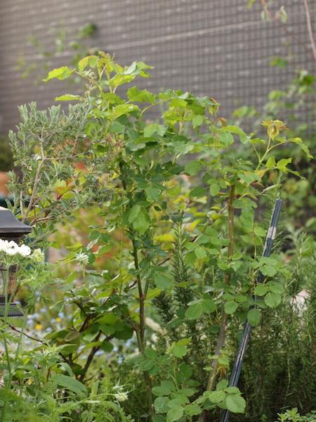 f:id:m-garden-life:20170424163706j:plain