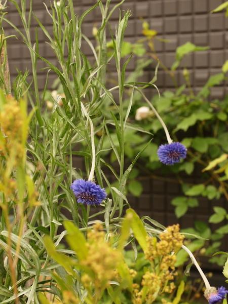 f:id:m-garden-life:20170427153205j:plain