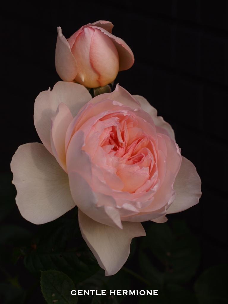 f:id:m-garden-life:20170429095130j:plain