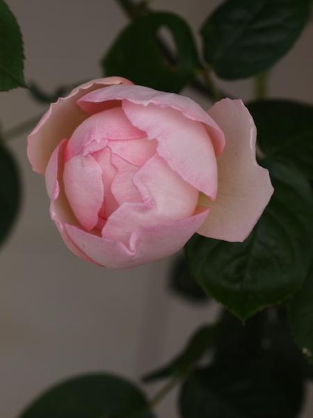 f:id:m-garden-life:20170429100132j:plain
