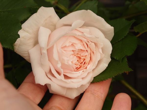 f:id:m-garden-life:20170429110013j:plain
