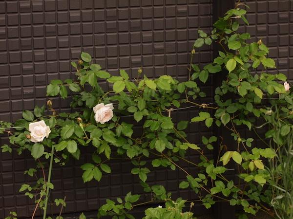 f:id:m-garden-life:20170429110057j:plain