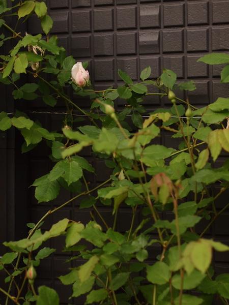 f:id:m-garden-life:20170429110256j:plain