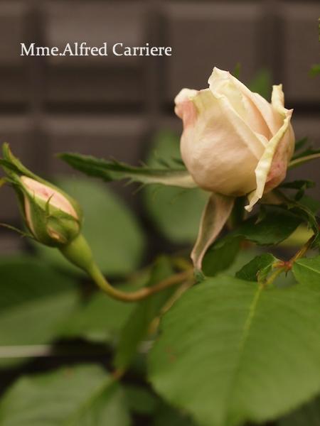 f:id:m-garden-life:20170430195821j:plain
