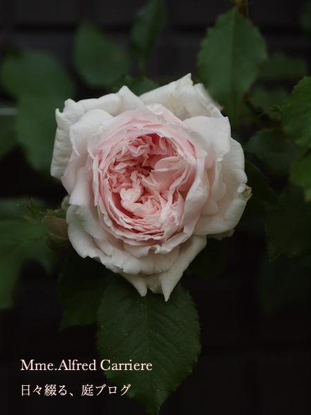f:id:m-garden-life:20170430200003j:plain