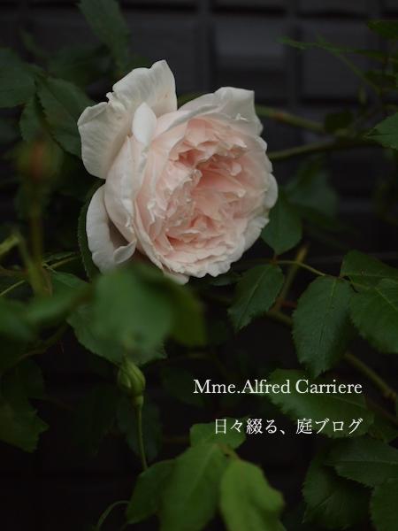 f:id:m-garden-life:20170430200218j:plain