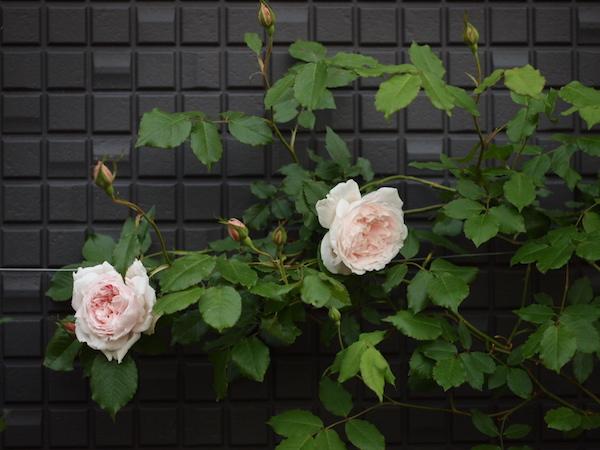f:id:m-garden-life:20170430200403j:plain