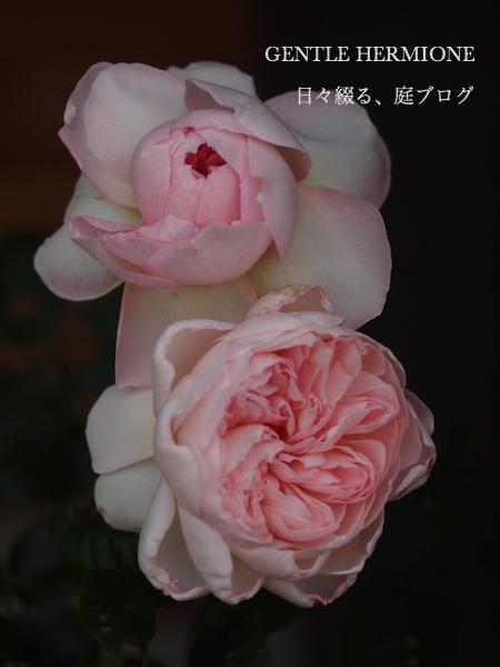 f:id:m-garden-life:20170430200726j:plain