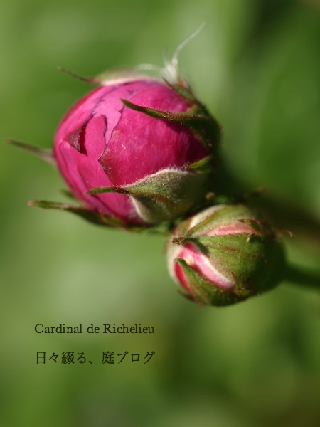 f:id:m-garden-life:20170430201350j:plain