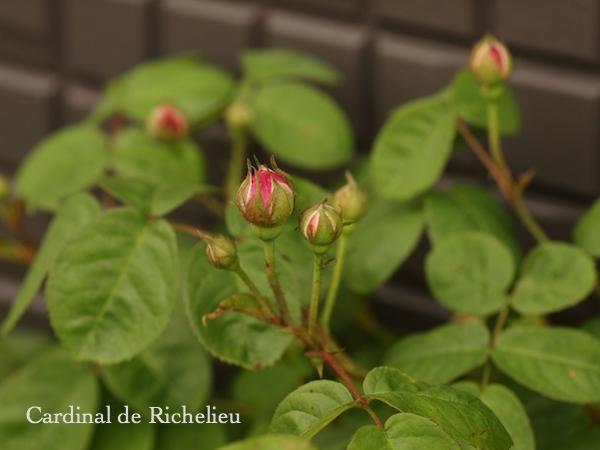 f:id:m-garden-life:20170430201615j:plain