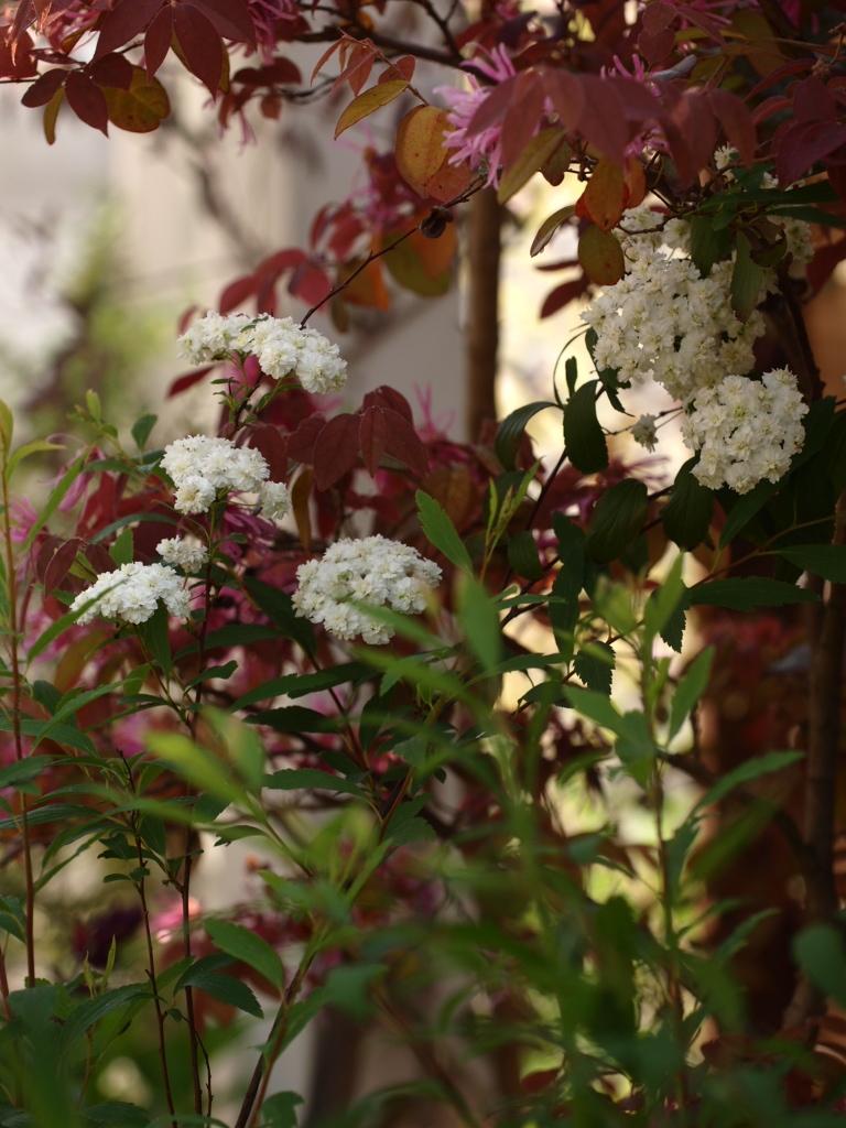 f:id:m-garden-life:20170430203207j:plain