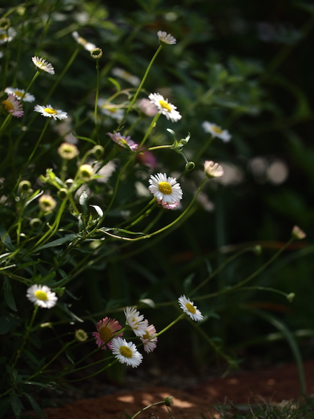 f:id:m-garden-life:20170430203325j:plain