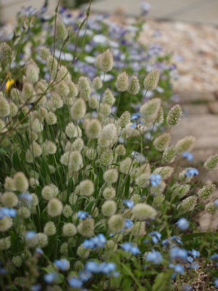 f:id:m-garden-life:20170430203816j:plain