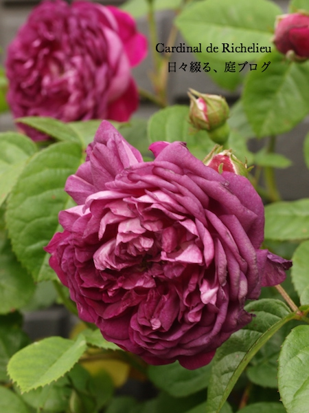 f:id:m-garden-life:20170502182537j:plain