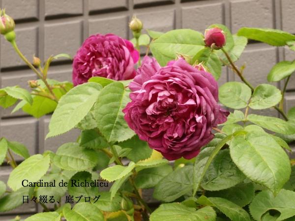 f:id:m-garden-life:20170502185919j:plain