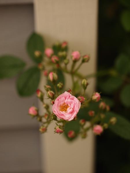 f:id:m-garden-life:20170504125455j:plain