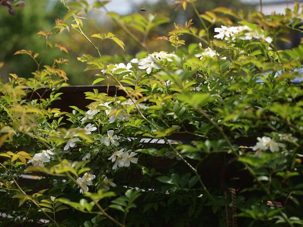 f:id:m-garden-life:20170504125548j:plain