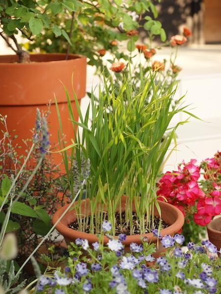 f:id:m-garden-life:20170504125736j:plain