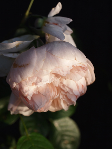 f:id:m-garden-life:20170504130530j:plain