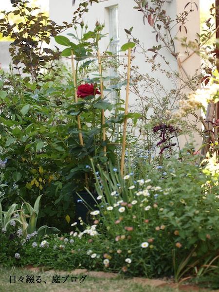 f:id:m-garden-life:20170505151019j:plain
