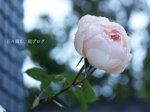 f:id:m-garden-life:20170506141201j:plain