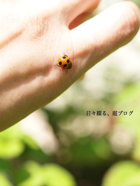 f:id:m-garden-life:20170507131232j:plain