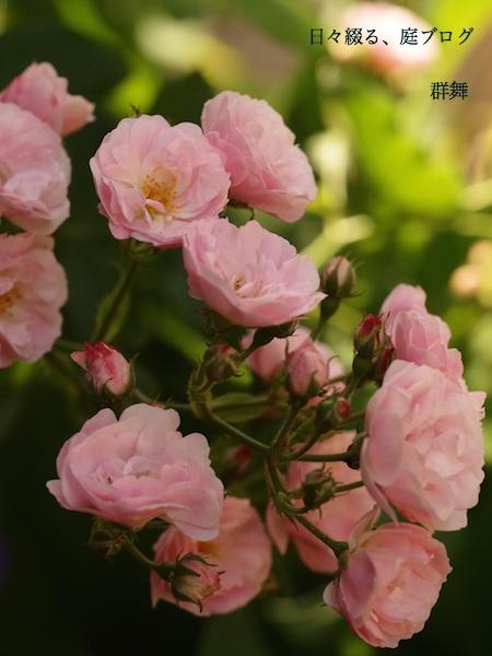 f:id:m-garden-life:20170507131405j:plain
