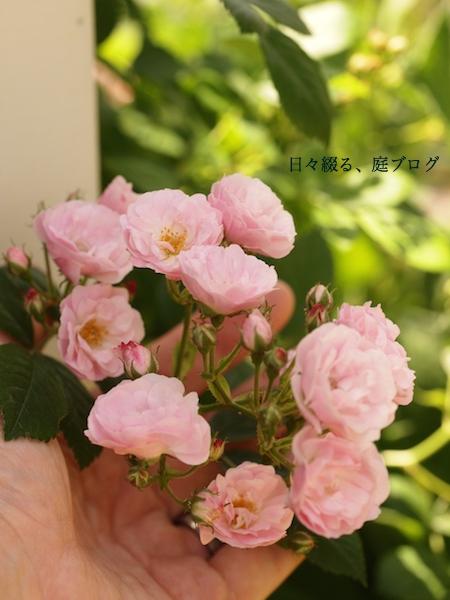 f:id:m-garden-life:20170507131505j:plain