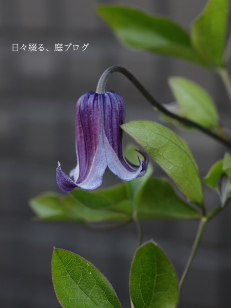 f:id:m-garden-life:20170507131642j:plain