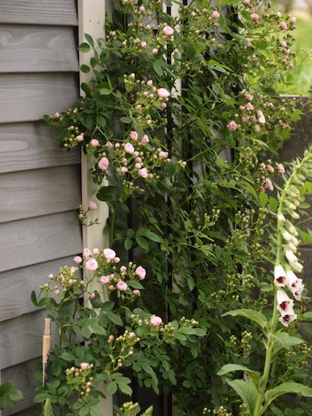 f:id:m-garden-life:20170507131941j:plain