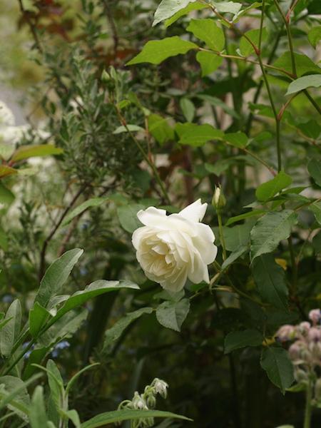 f:id:m-garden-life:20170510092556j:plain
