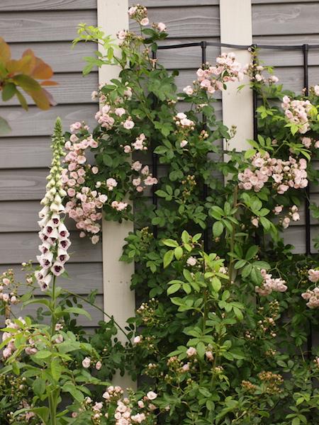 f:id:m-garden-life:20170510093220j:plain
