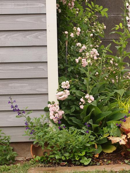f:id:m-garden-life:20170510093458j:plain