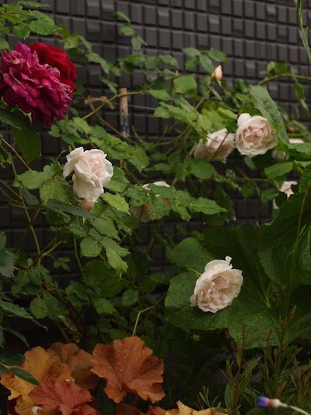 f:id:m-garden-life:20170510093904j:plain