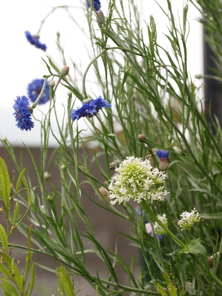 f:id:m-garden-life:20170510095144j:plain