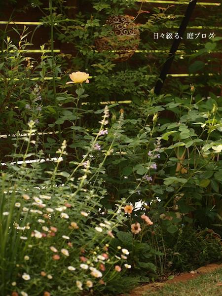 f:id:m-garden-life:20170511111237j:plain