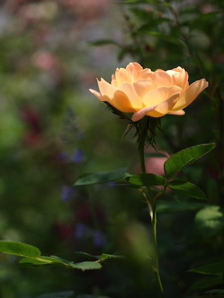 f:id:m-garden-life:20170511111520j:plain