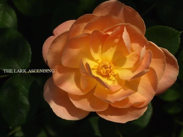 f:id:m-garden-life:20170511111850j:plain