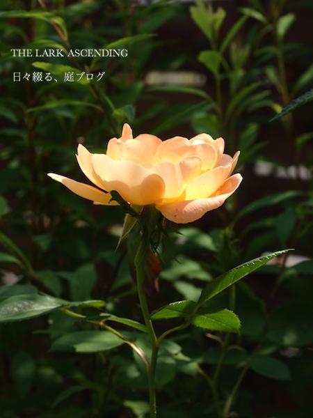 f:id:m-garden-life:20170511112333j:plain
