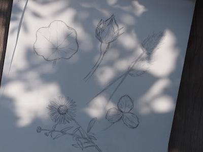 f:id:m-garden-life:20170511112426j:plain