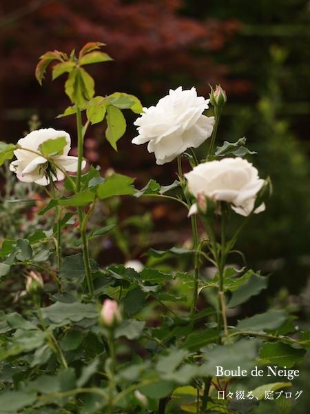 f:id:m-garden-life:20170512110059j:plain