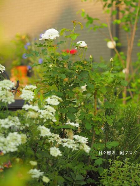 f:id:m-garden-life:20170512110318j:plain